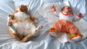 Can-Cats-Eat-Baby-Food