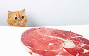 Can-Cats-Eat-Beef