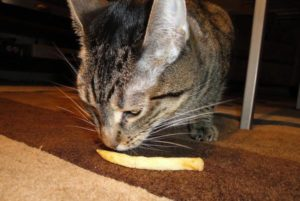 Can-Cats-Eat-French-Fries