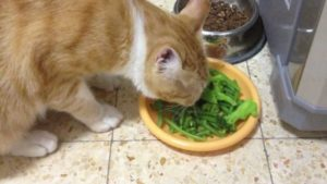 Can-Cats-Eat-Green-Beans