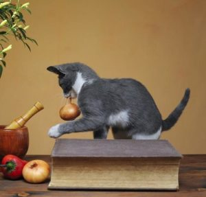 Can-Cats-Eat-Onions