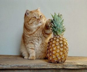 Can-Cats-Eat-Pineapple