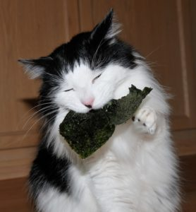 Can-Cats-Eat-Seaweed