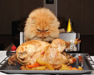 Can-Cats-Eat-Turkey