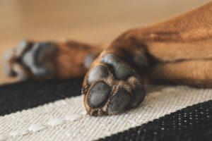 dog paws close up