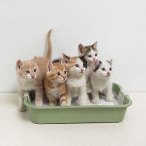 best self cleaning litter box