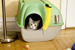 cute cat using an automated litter box