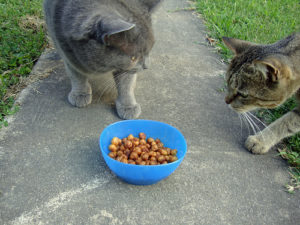 Can-Cats-Eat-Chickpeas