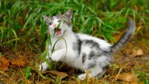Can-Cats-Eat-Grass