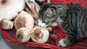 cat-mushrooms