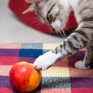 Can-Cats-Eat-Peaches