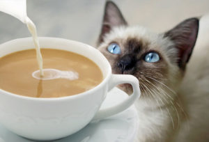Can-Cats-Drink-Coffee