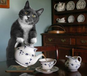 Can-Cats-Drink-Tea