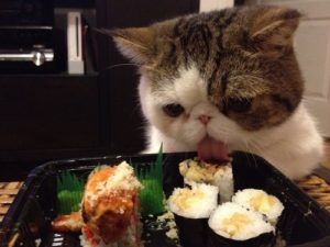 Can-Cats-Eat-Sushi