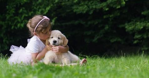 Bringing Golden Retriever Puppy Home