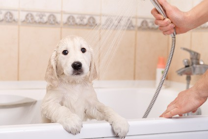 How Often Should You Wash a Labrador