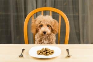 How Many Calories Should My Dog Eat Per Day