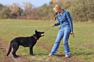 german shepherd with his trainer