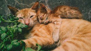 cat-and-kitten
