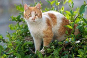 white-tabby-cat-outdoors