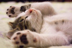 animal-cat-face-close-up-feline