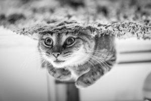 close-up-of-cat