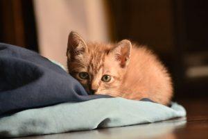 kitten-reclining-on-floor
