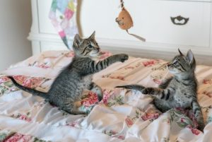 tabby-kittens-on-floral-comforter