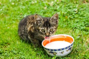 cat and his bowl