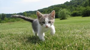 kitten on grass