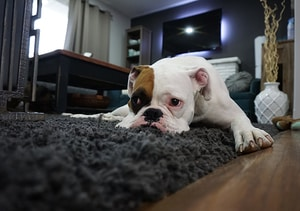 What should we do if our dogs poop too often
