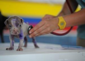 best dog food for bloodhound