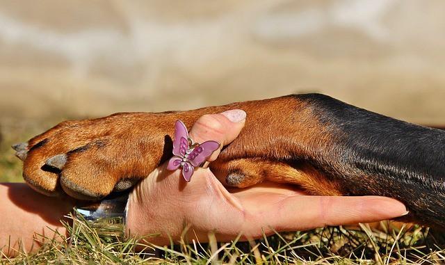 pawing dog