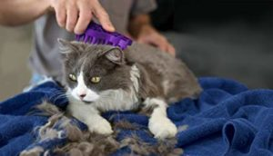 Cat Grooming Brush