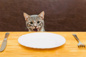 young cat after eating food from kitchen plate