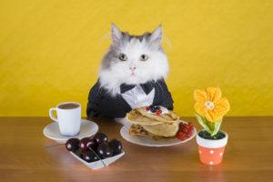 cat in a jacket pancake