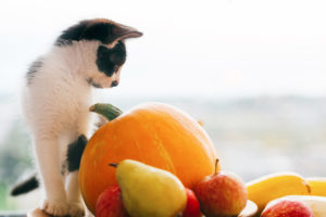 Adorable kitty sitting on pumpkin