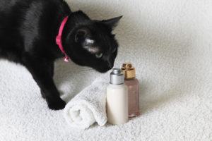 Black cat with a shampoo bottle
