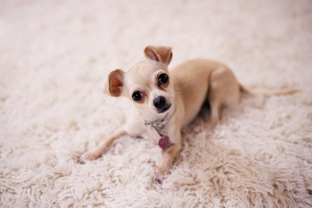 adorable-animal-baby
