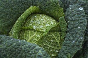 cabbage-kale-veggies