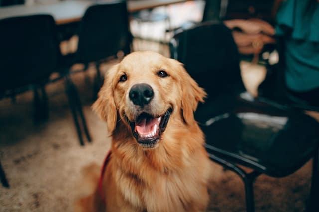 dog in an auditorium