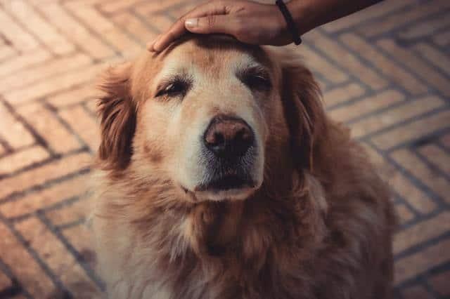 women petting a dog