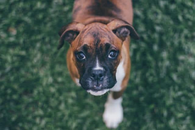 adorable-animal-baby-dog