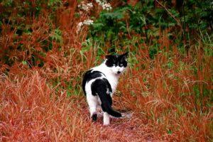 cat eating liquorice-mint