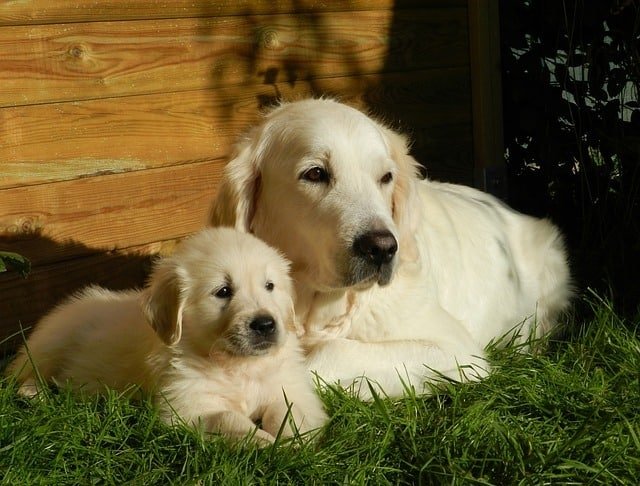 dog and her mother