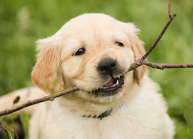 puppy biting a branch