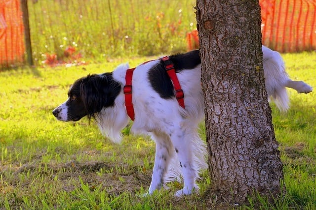 dog peeing near a tree