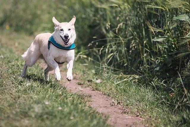 an active dog