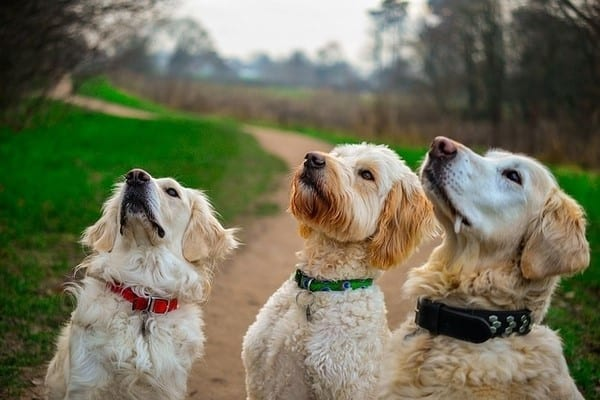 dogs looking at the sky