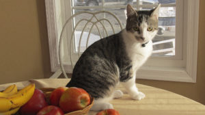 cat on a fruit table